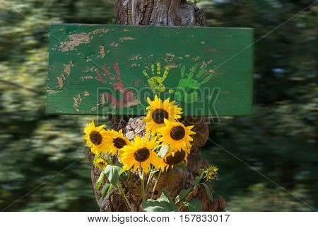 Green wood board and copy space with colorful bright yellow sunflower Helianthus background deliberate motion blur.