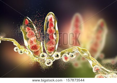 Destruction of fungus Trichophyton mentagrophytes which causes athlete's foot Tinea pedis and scalp ringworm Tinea capitus. 3D illustration. Concept for antifungal treatment