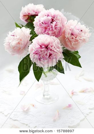 Vase of pink peony on a white background