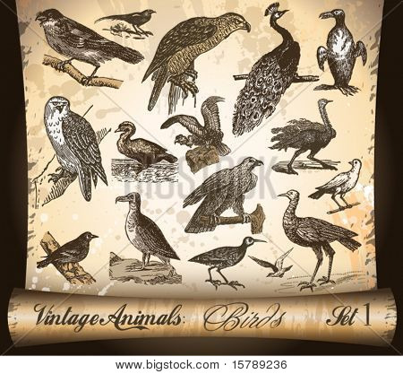 Vintage Animals Collection: Birds. With Antique distressed parchment background