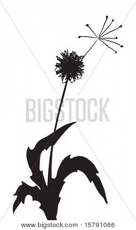 Vector illustration of a dandelion outline with one fuzz