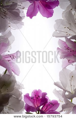 White Flower Frame Over White Background