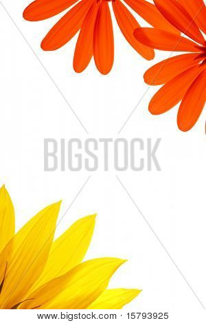 Blank white page decorated with natural flower details.
