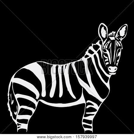 Hand-drawn pencil graphics, zebra. Engraving, stencil style. Black and white logo, sign, emblem, symbol. Stamp, seal. Simple illustration. Sketch.