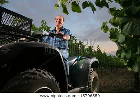 Farmer in vineyard driving small tractor or all terrain vehicle.
