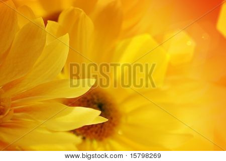 Sunflowers bouquet over sunset background. Close-up, shallow DOF, focus on foreground flower.