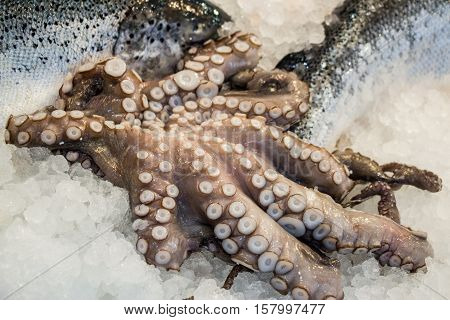 Octopus lies on ice in the fish shop. Octopus for sale. Horizontal. Close up.