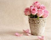 pic of flower pot  - rose flowers in old - JPG