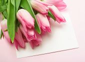 Blank card for spring, Easter, or Mothers Day with pink tulips