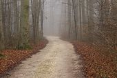 Постер, плакат: Autumn View Of Misty Forest Autumn Nature Autumn Road In Dense Fog Foggy Autumn Landscape With Ba