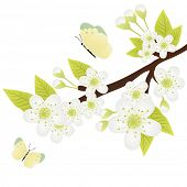 pic of apple blossom  - Vector illustration of apple - JPG