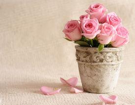 image of flower pot  - rose flowers in old - JPG