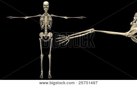 3D human skeleton medical detail illustration