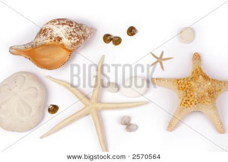 Sea Shell And Star Fish