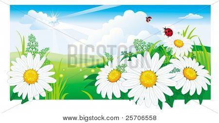 Summer landscape with a chamomile. Vector illustration