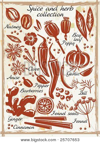 Colección de especias y hierbas
