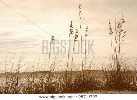 Beach Sawgrass