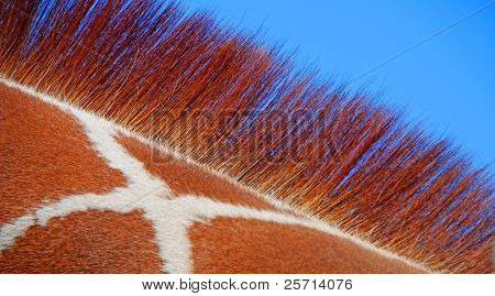 Giraffe Pattern and Mane