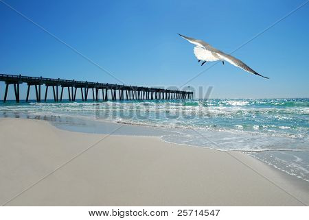 Seagull By Pier