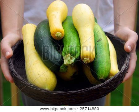 Basket of Fresh Picked Zucchini and Squash Being Held