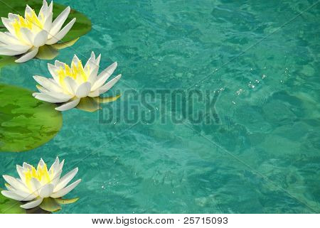 Water Lillies on Turquoise Pool