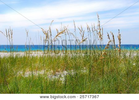 Beautiful Sea Oats with Turquoise Sea in distance