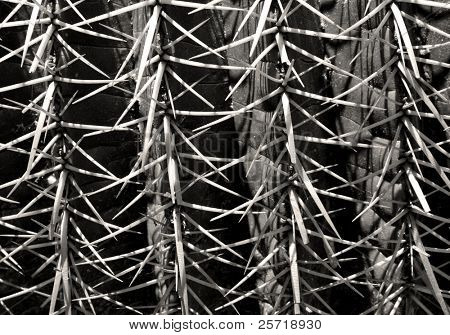 Pointy cactus spikes and spines