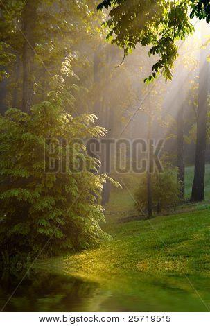 Nebeliger Morgen reflektieren Teich und Bäumen in Wäldern