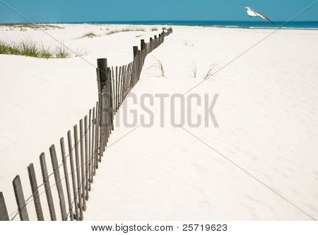 Pretty white beach and fence at oceanside with seagull soaring overhead
