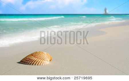 Pretty seashell on beach with sailboat and clouds in distance