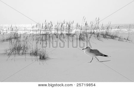 Seagull walking on pretty sand dune by ocean