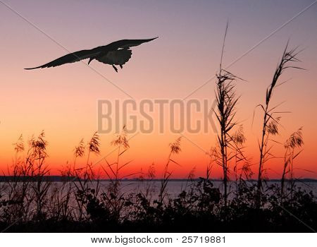 Seagull flying at seashore at sunset