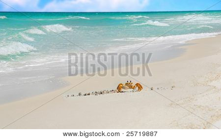 Crab crawling on beach with pretty ocean in distance