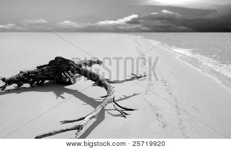 Huge piece of driftwood on shore of empty beach with storm clouds on horizon