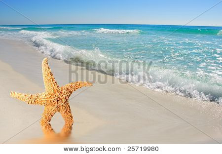 Starfish on deserted beach with pretty ocean waves