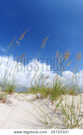 Sand dune and grasses under pretty sky with low cloud bank