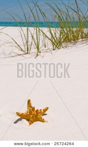 Starfish on beach with ocean in distance