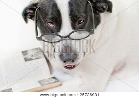 Dog interrupted while reading book