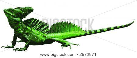 Emerald Double-Crested Basilisk