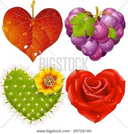 Shape of heart set 3. Fall leaf, grapes, cactus and rose