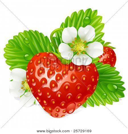 Vetor de morango em forma de coração e branco flores