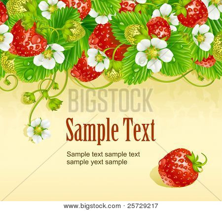 Vector strawberry frame 2. Red berry and white flower