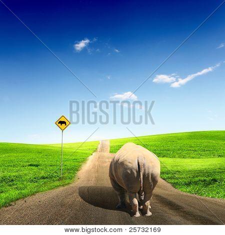 Collage with big wild rhino walking on a road
