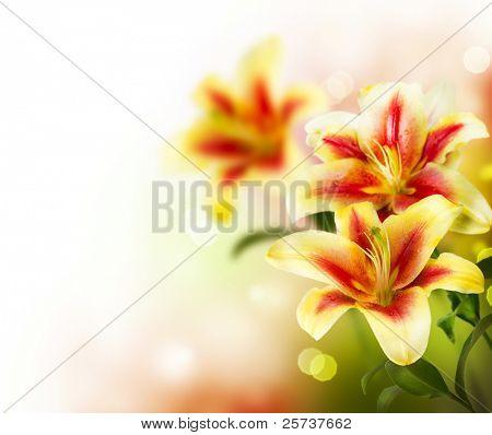 design.spring Blumen Lilie Blumen Grenze
