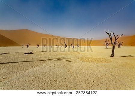 Dead Acacia Trees In Sossusvlei