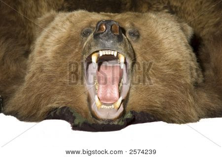 Grissly Bear