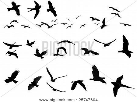birds vector for decorating photos and image