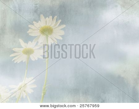 Daisy flower in vintage painting style against abstract blue sky - romantic floral design in white and blue tone - light grunge background