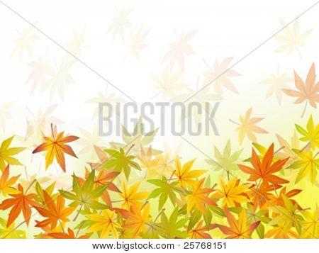 Fall background - autumn leaf