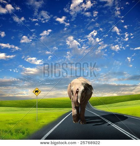 Elephant walking along the road